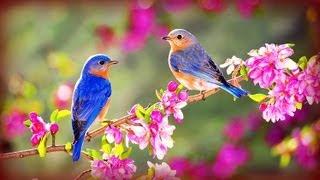 ❀ Morning Birds + Soft Rain ©