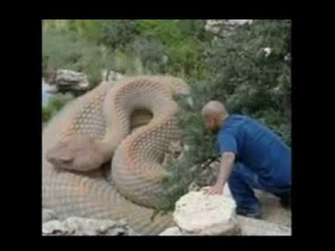самых больших змей фото