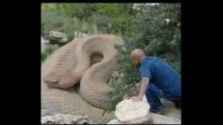 Самые большие змеи в мире .