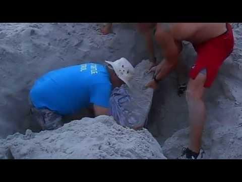 Sea turtle rescue in Jacksonville Beach (part 1)