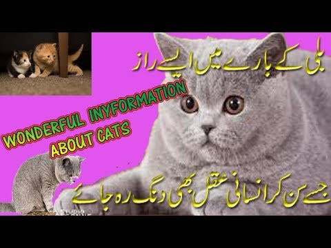 Wonderfull information about Cats. Amazing Facts of Cats in URDU Hindi Cat Video