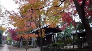 幕末の大老、井伊直弼の墓のある東京・世田谷の豪徳寺。2010年秋、境内...