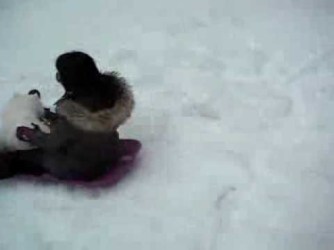 Atlas - Sledding in the snow/ Fait de la luge dans la neige Travel Video