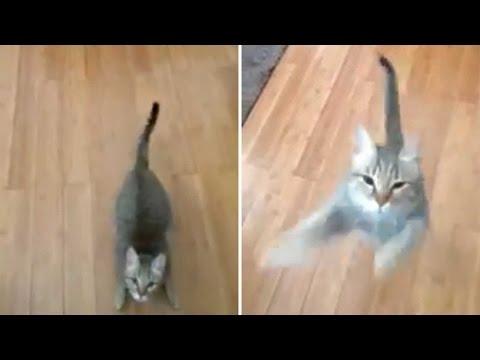 Cat Hates Owners Singing