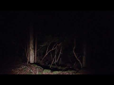 Aokigahara at Night  Part 2,  VR-360  (beyond the ropes)