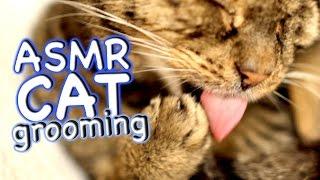 ASMR Cat  Grooming #34