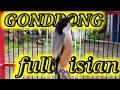 Cendet Gondrong Full Isian Kenari Sikatan Londo Kapas Tembak Suara Pancingan Cendet Susah Bunyi  Mp3 - Mp4 Download