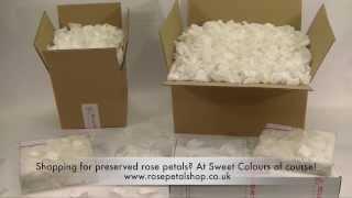 Preserved rose petals White