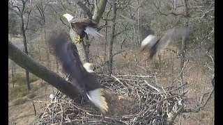 AEF NADC EAGLE CAM:  25 MAR 2019 - A Visitor Learns a Lesson