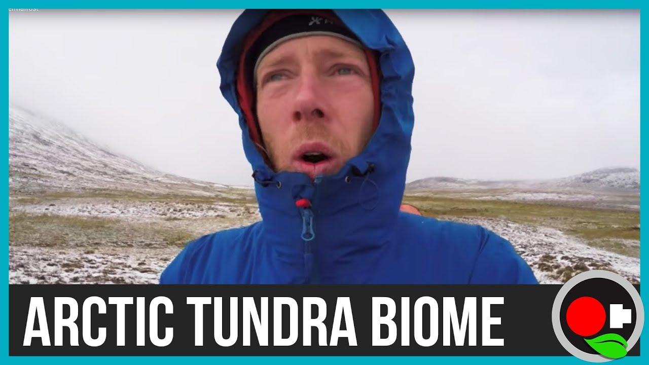 Arctic Tundra Biome - Untamed Science