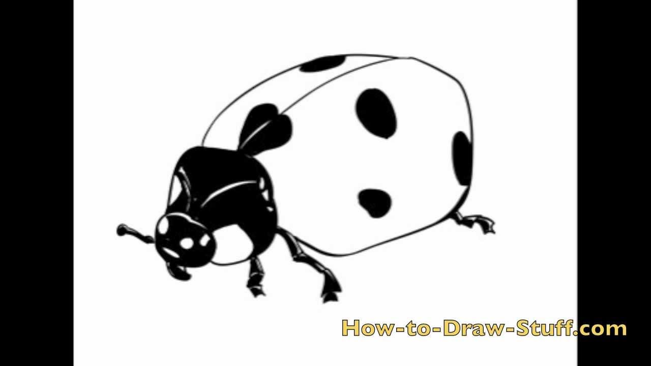 how to draw a ladybug step by step youtube