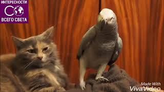 Классное видео про кошку и попугая