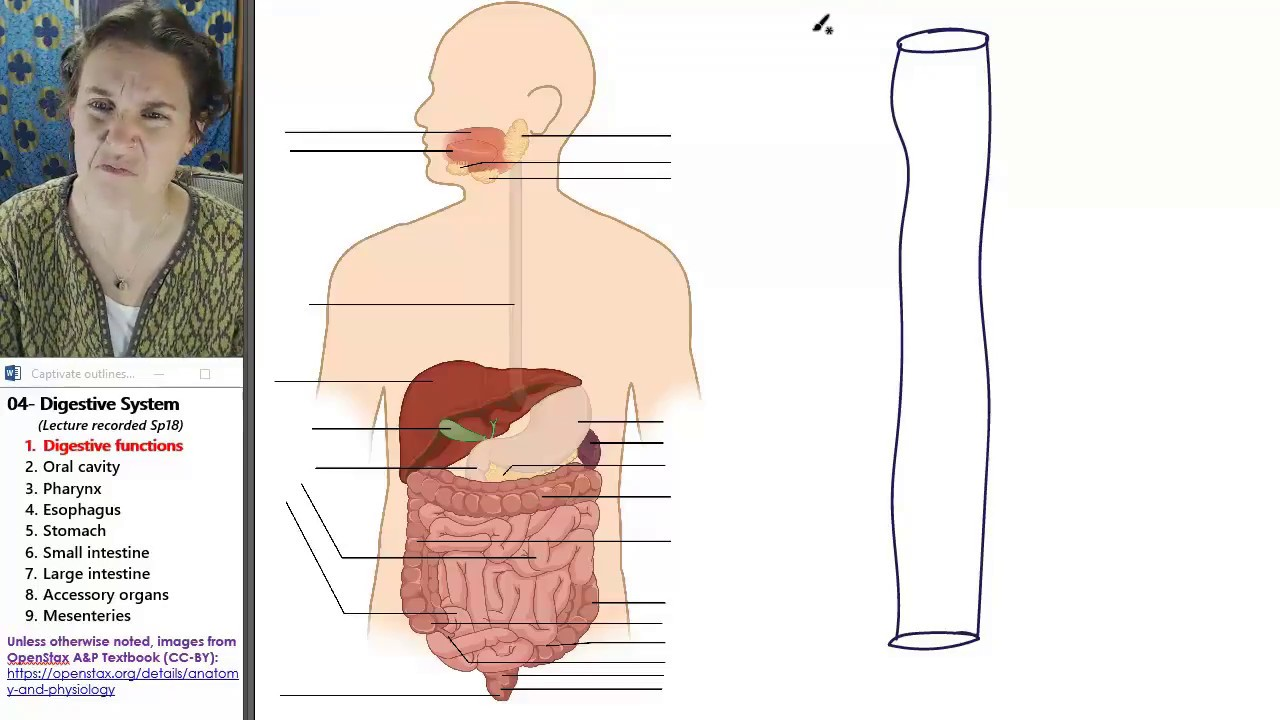 Digestive system 1- Functions