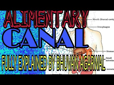 Alimentary Canal........ Fully explained by BHUVAN AGARWAL.