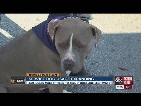 Increase in use of service dogs causes confusion
