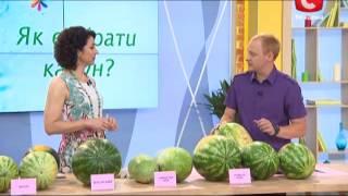 Как выбрать арбуз - Все буде добре - Выпуск 232 - 8.08.2013