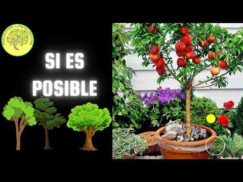 Arboles frutales en maceta youtube for Arboles frutales en maceta