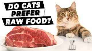 Raw Or Cooked Duck? Which Will The Cats Choose? | Ultimate Pet Nutrition