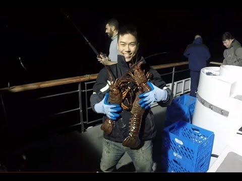 GailForce Sportfishing - March 7th 2015 - Catalina Lobster Hoopnetting