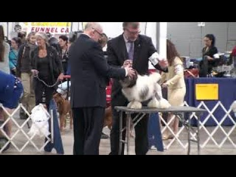 2018-11-18 Philadelphia Kennel Club Lowchen Judging