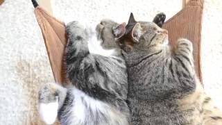 ハンモックで寛ぐまるとはな2。-Maru&Hana are relaxed on the hammock 2.-