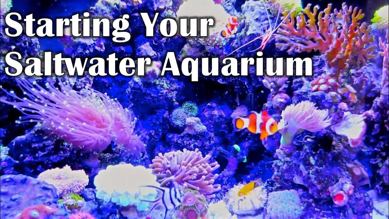 Saltwater aquarium - Starting Your Saltwater Aquarium Things I Wish I Knew