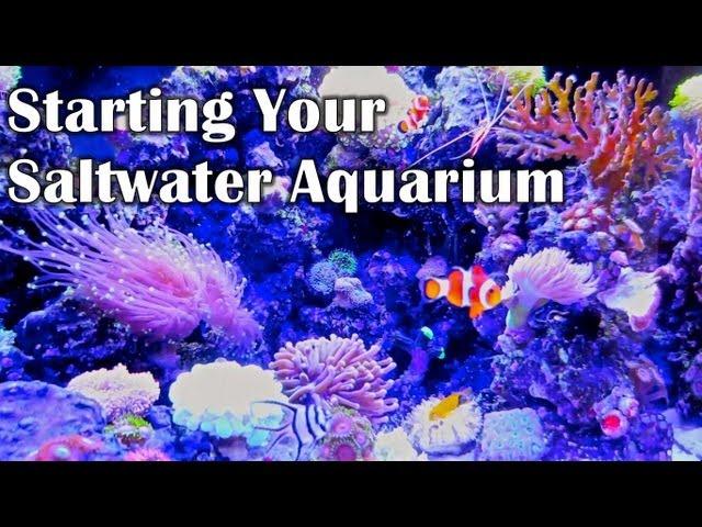 STARTING YOUR SALTWATER AQUARIUM - Things I Wish I Knew