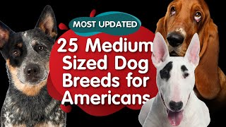 Top 25 Medium Sized Dog Breeds for American (MOST UPDATED)