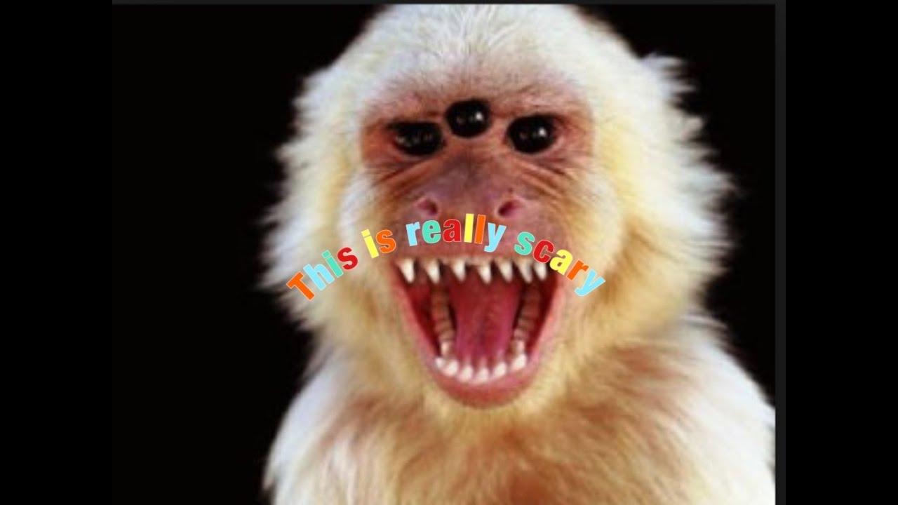 Scary Movie Monkey