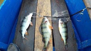 Рыбалка на старой дедушкиной лодке Окунь сегодня активен Ловля окуня на силикон