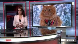 Cat Jesper | Jesper - verdens mest kjente katter