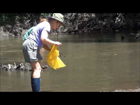 Mud Bottom Stream Mussel Search