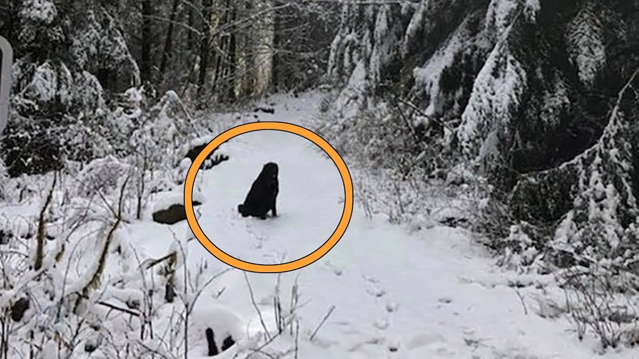this-strange-dog-started-following-couple-on-hike-then-they-see-what-s-written-on-his-collar