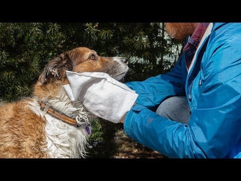 Scrubby | Rinse-Free Pet Bath Mittens