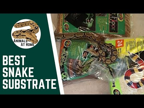Best Ball Python Substrate- 5 Options, 1 to Avoid (Video)