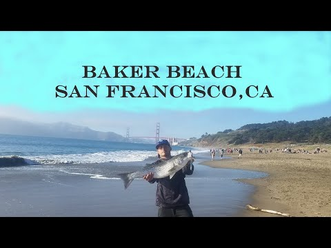 **GIANT STRIPERS FROM THE SURF** SF BAKER BEACH, CALIFORNIA **FREAKIN TANK**