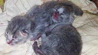 КОТЯТАМ ОДИН ДЕНЬ. Как чувствует себя новорожденный котенок?