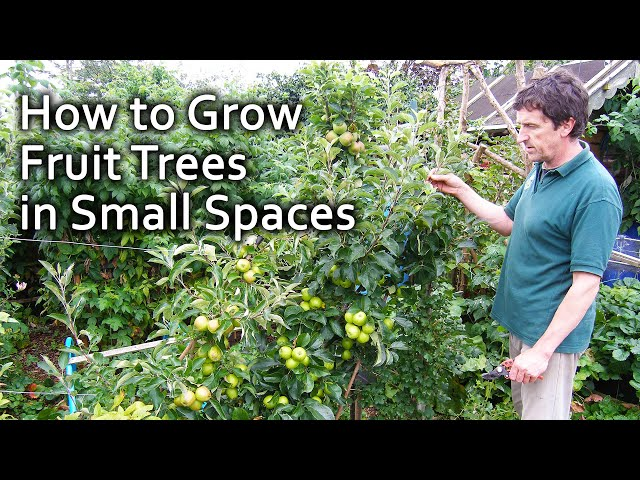 How to Grow Fruit Trees in Small Spaces