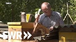 Der Königinnen-Züchter - Leo Famulla und seine sanften Bienen | SWR Mensch Leute