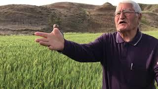 Tarla Tarımı İlginçtir Üstü Açık Fabrikadır