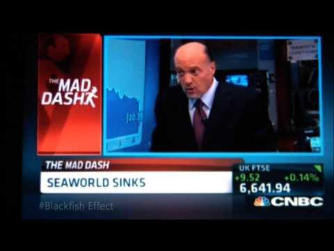 SeaWorld Sinks Due To The #Blackfish Effect
