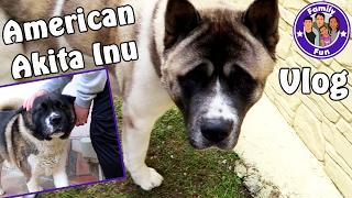 AMERICAN AKITA INU SCHWERE ENTSCHEIDUNG Hunde Vlog #57  Our life FAMILY FUN
