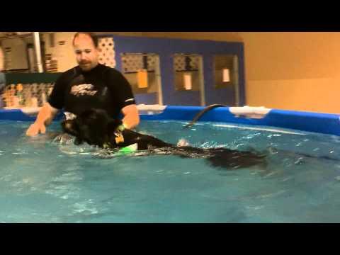 Pool Time with Nico!