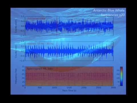 Calls of an Antarctic Blue Whale