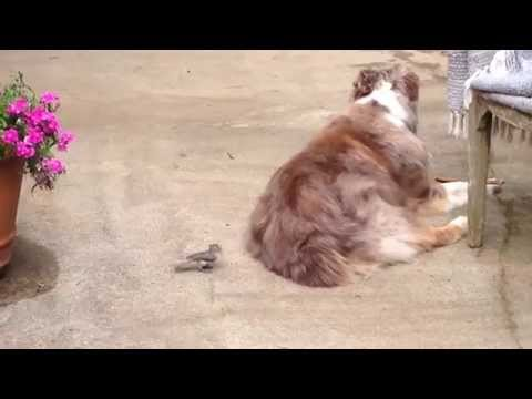 Dog Friend Doesn't Mind Stealing His Fur At All!