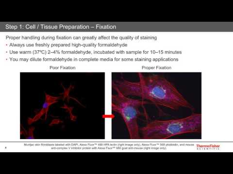 Jason Kilgore - Five Steps For Publication-quality Fixed-cell Imaging The First Time