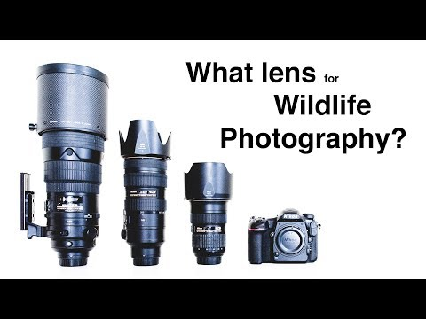 What lens for wildlife photography?