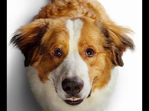 A Dog's Journey Trailer Song (Phillip Phillips - Gone Gone Gone)