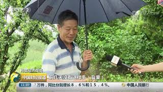 [中国财经报道]月度经济观察 浙江嵊州:持续降雨影响 桃形李大面积裂果  CCTV财经