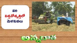 Tips for Paddy Seed Production || ETV Annadata